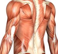 Anatomy Online Course - AAPC